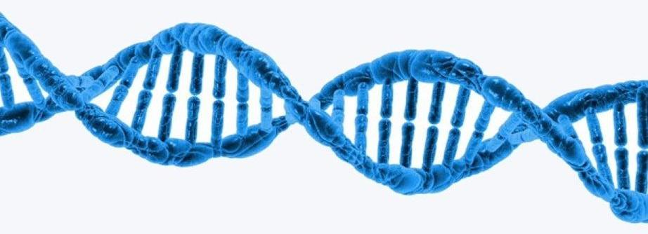Londra dice sì alla creazione di embrioni uomo-animale