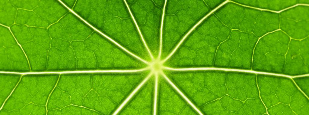 La fotosintesi clorofilliana dal punto di vista quantistico